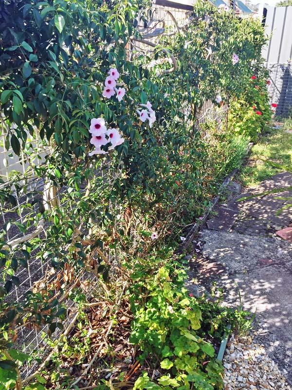 Nambucca Lifestyle Village - Garden